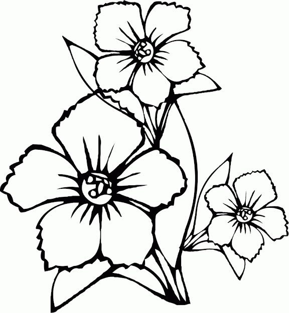 Flower Pot Coloring Pages To And Print