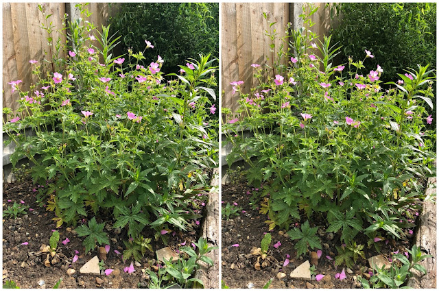 Images of a bush with pink flowers on taken side by side on the iPhone 8 Plus and iPhone X