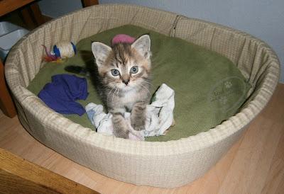 Kot w dom!