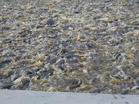 Trik dan Tips Cara Budidaya Ikan Lele Di Kolam Beton yang Hemat