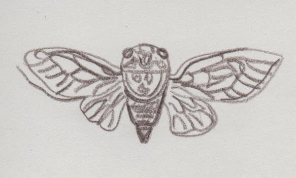 sketch by David Borden of a cicada with its wings fully extended