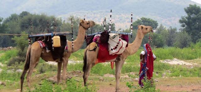 Rabarai Tribe in Rajasthan