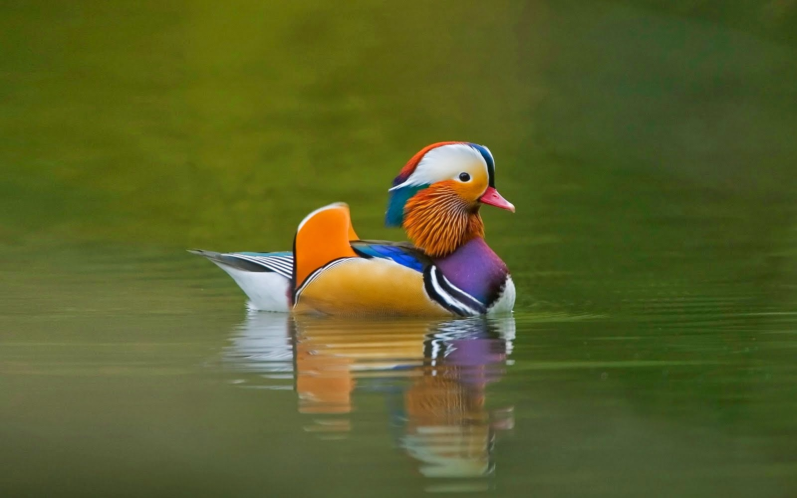 Beautiful birds pics hd for kids wallpapers parot bird - Animal and bird hd wallpaper ...