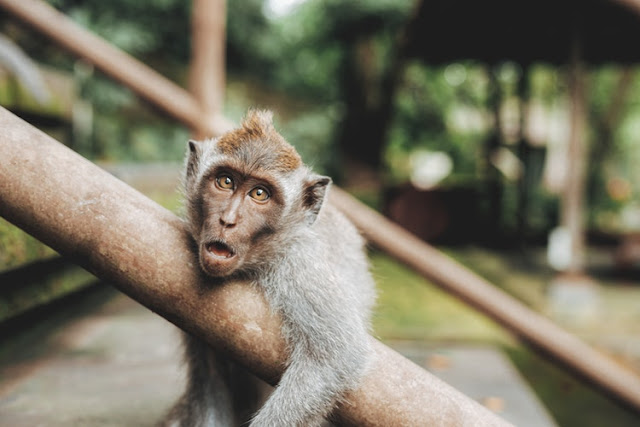 Monkey Carts Allegely Carts Away With N70-Million From A Farm