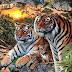 Cuantos Tigres ocultos hay en la imagen