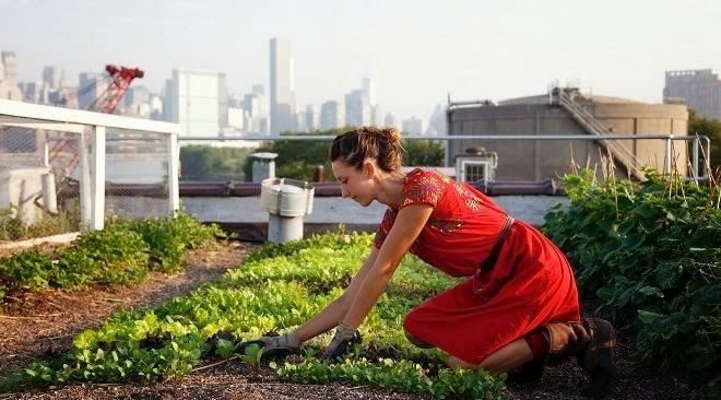 los huertos urbanos los huertos urbanos surgen por la necesidad de cultivar nuestros propios alimentos debido a la crisis por razones ecolgicas y como