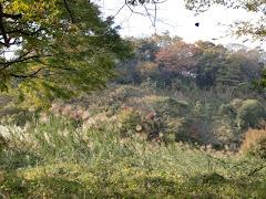 永福寺の景色