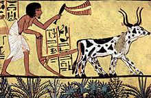 Jasa Hidroponik,Urban Farming,