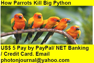 How Parrots Kill Big Python bird story book