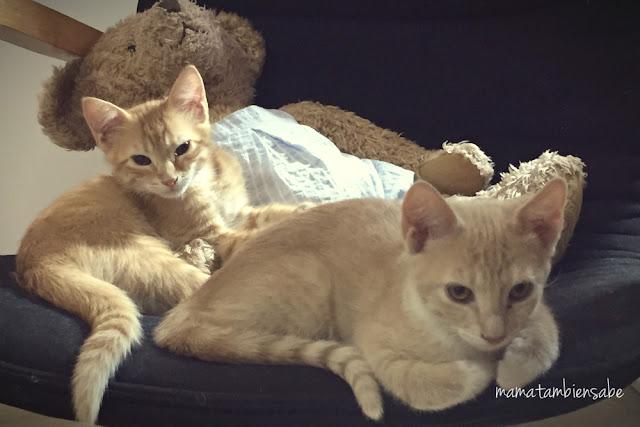 Adoptar gatos es la mejor opción
