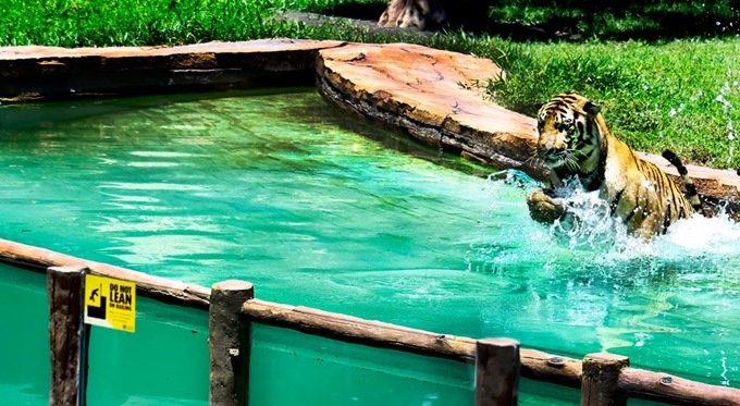 Taman Safari & Marine park Bali  salah satu 7 Taman Wisata Terbaik Di Indonesia Yang Bisa Anda Kunjungi Bersama Keluarga.