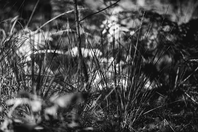 Waldimpressionen, Pomponetti
