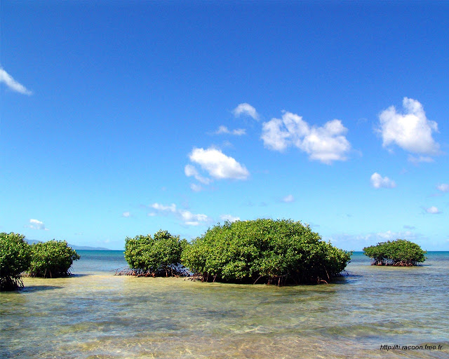 Lesteflo : excursion et visite de Mangrove de Petit Canal en Guadeloupe avec Max