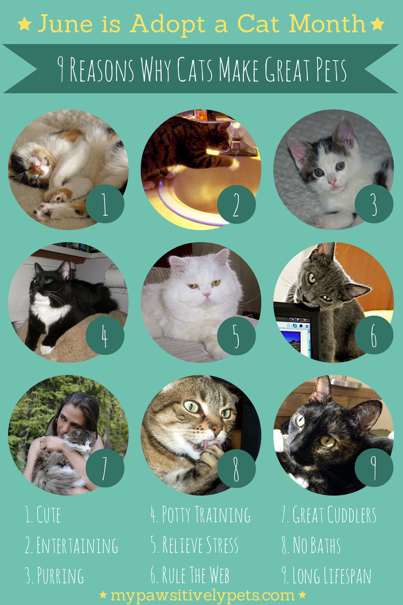 9 Reasons Why Cats Make Great Pets