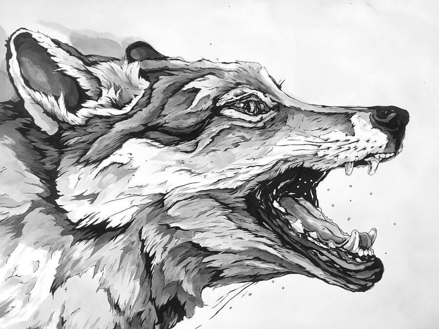 11-Coyote-A-Landerman-Animal-Drawings-Paintings-in-Graphite-and-Ink