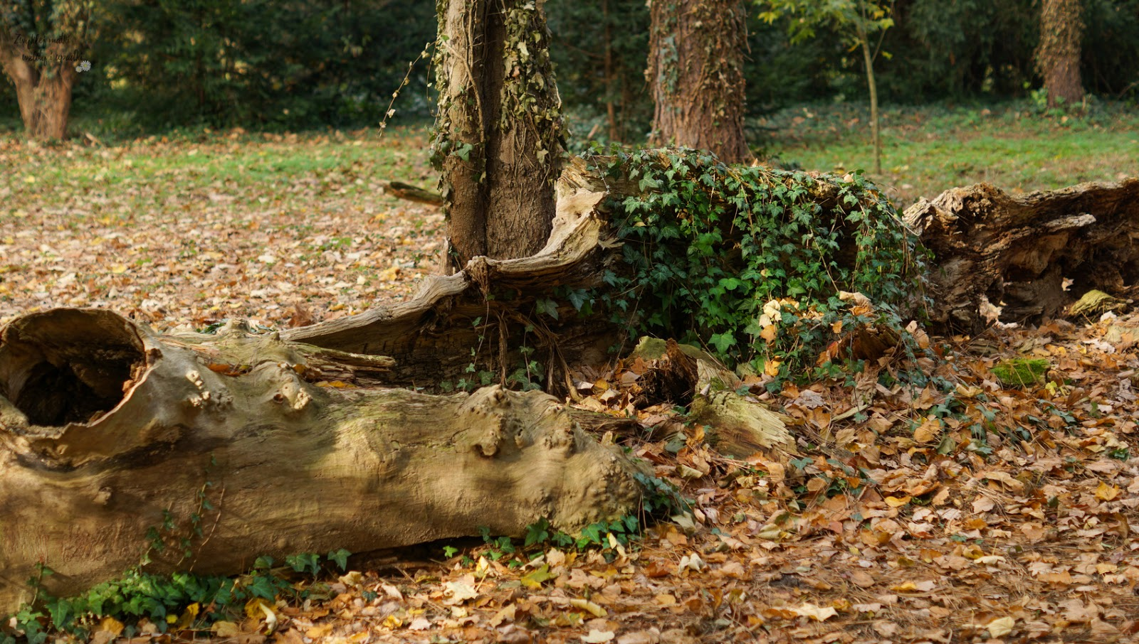 Spacer po Kórniku, czyli jesień w Arboretum