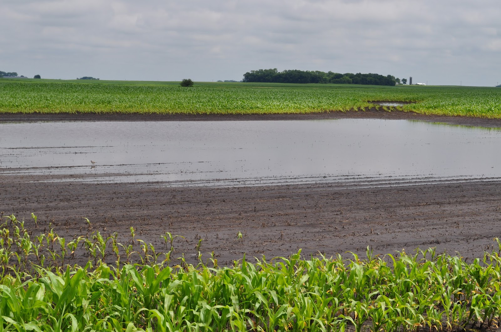 Drowned-out or hailed-out crops and prevented planting