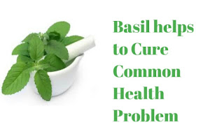 Basil helps to Cure Common Health Problem