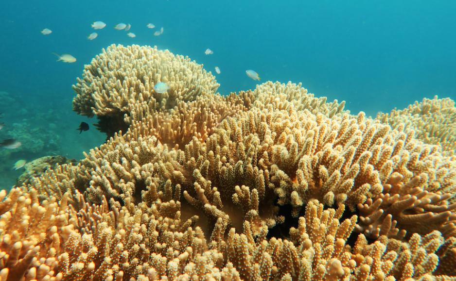 Buku ajar sosiologi komunikasi oleh: Penyebab utama kerusakan terumbu karang - masrafli.com