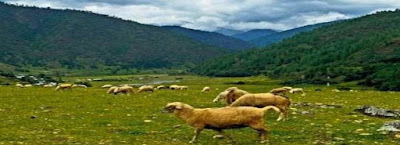 TALLEY VALLEY WILDLIFE SANCTUARY, Arunanchal Pradesh