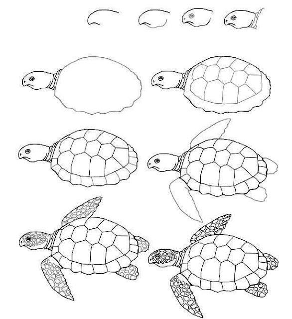 رسم سلحفاة للاطفال