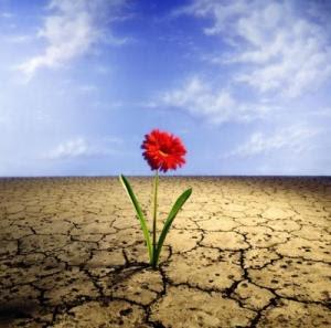 As flores de sua vida