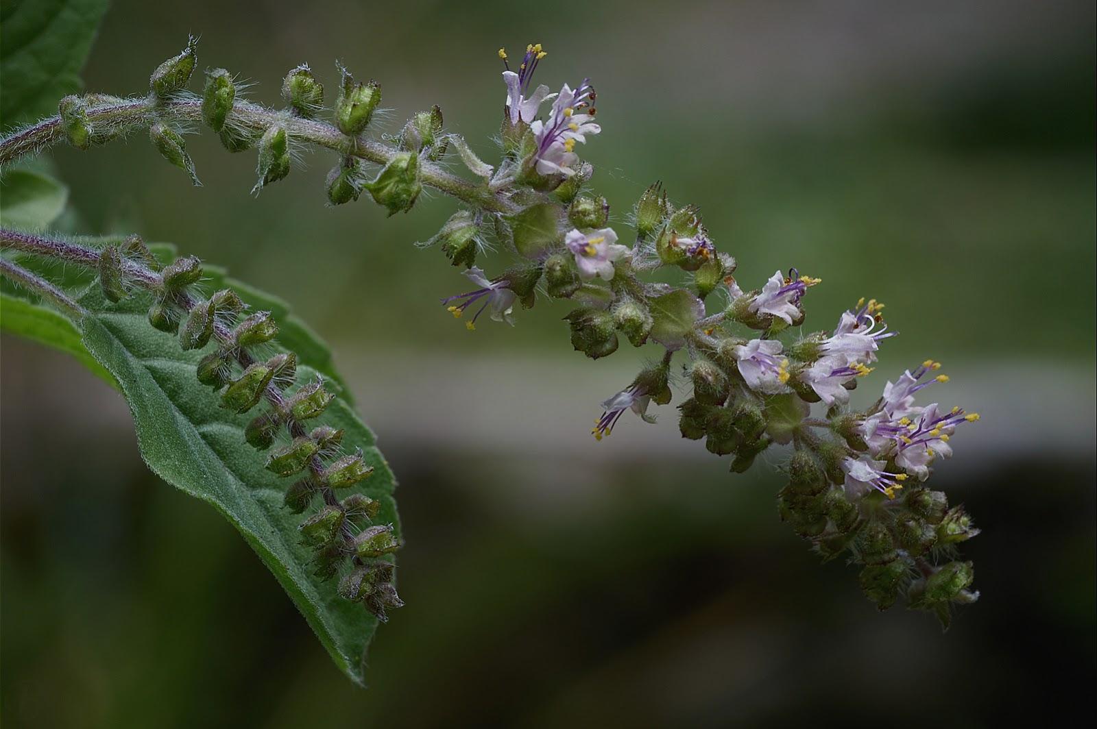 macro photography, soft, subtle, garden, flowers, Philippines