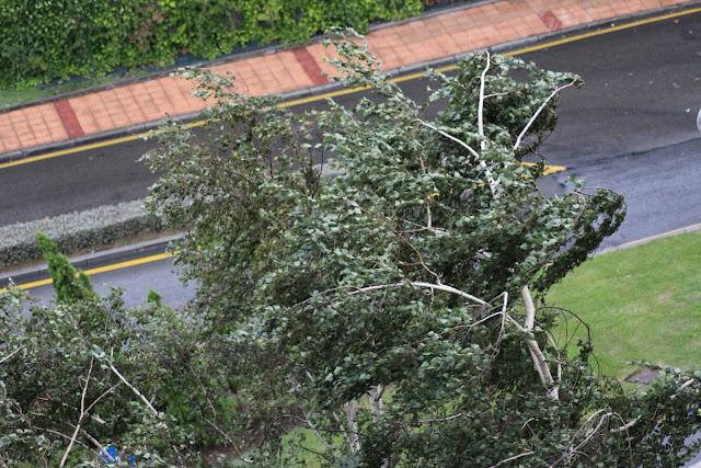 El viento sacude un árbol en Cruces