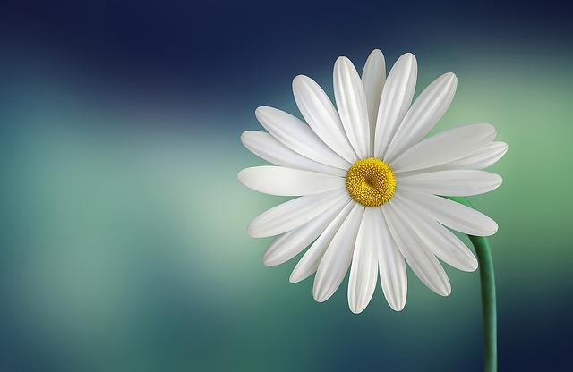 hoa đẹp nhất thế giới 21