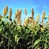 Agricultural practices in Rajasthan राजस्थान की कृषि पद्वतियां