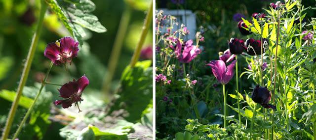 Blomster i rosa og lilla toner
