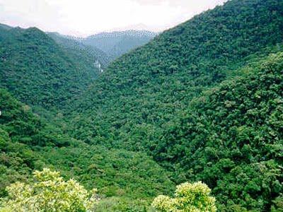 Floresta Atlântica