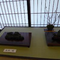 大阪天満宮・大盆梅展(盆梅と盆石展) 瓜渓石