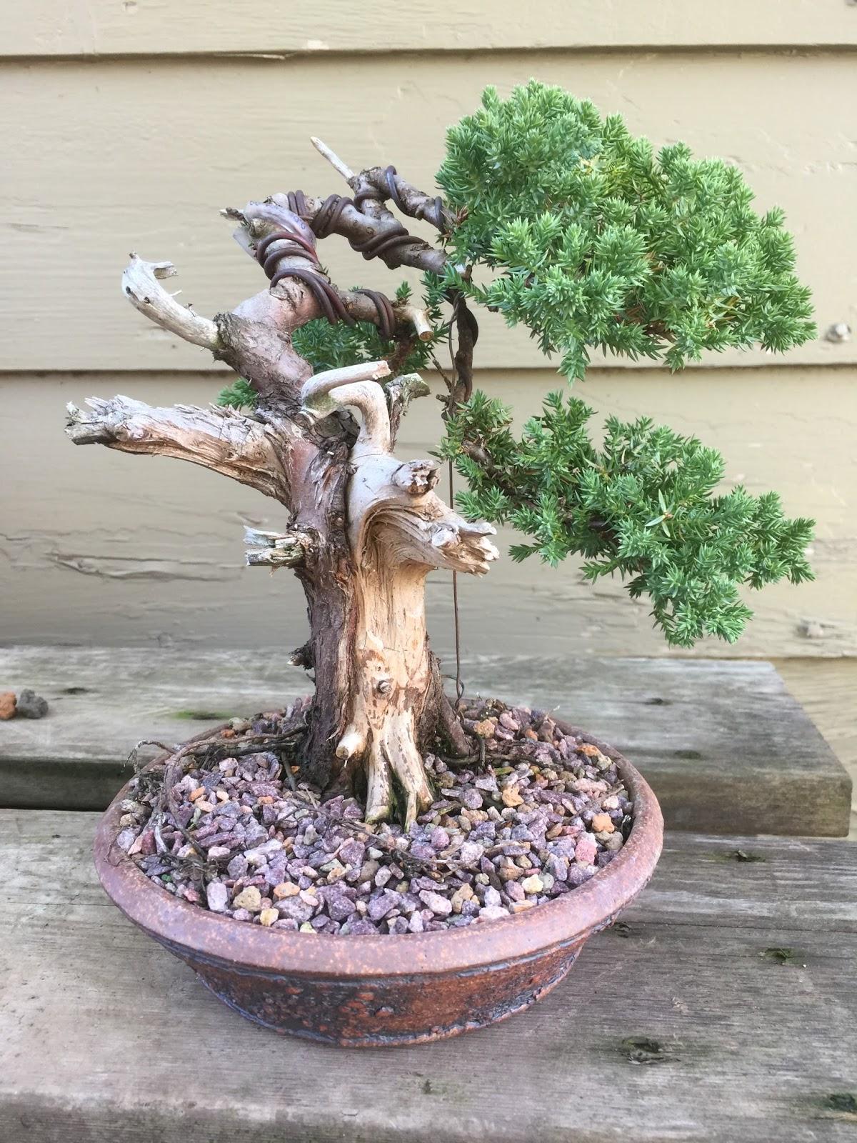 Bonsai Mr Miyagi : bonsai, miyagi, Bonsai, Tree:, Amazing, Miyagi, Ideas
