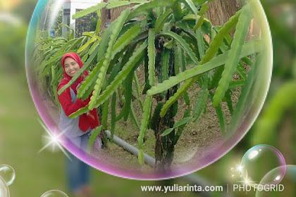 Agrowisata Jollong, Tempat Liburan Seru di Pati