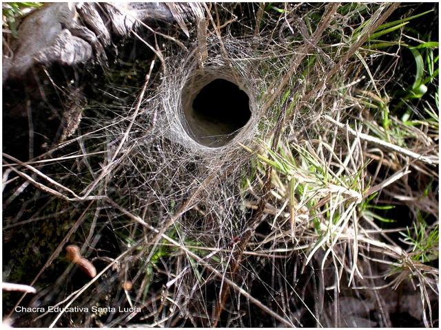Cada especie construye una estructura particular - Chacra Educativa Santa Lucía