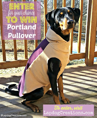 rescued doberman mix dog with jacket giveaway