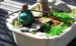 bonsai watering system