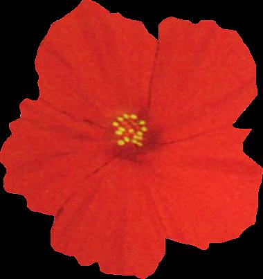 png flor roja