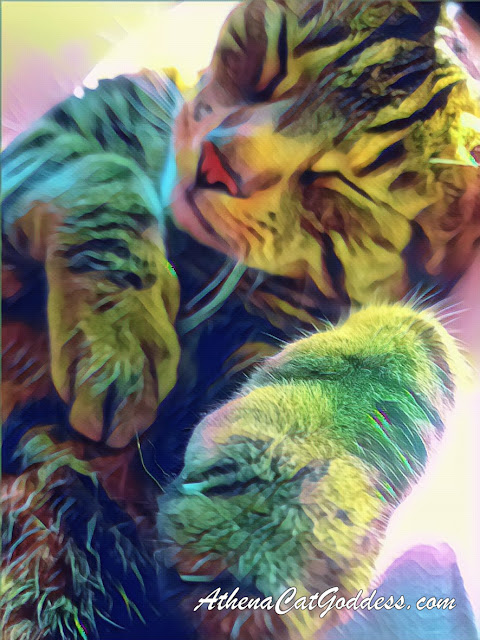 tabby cat cat art