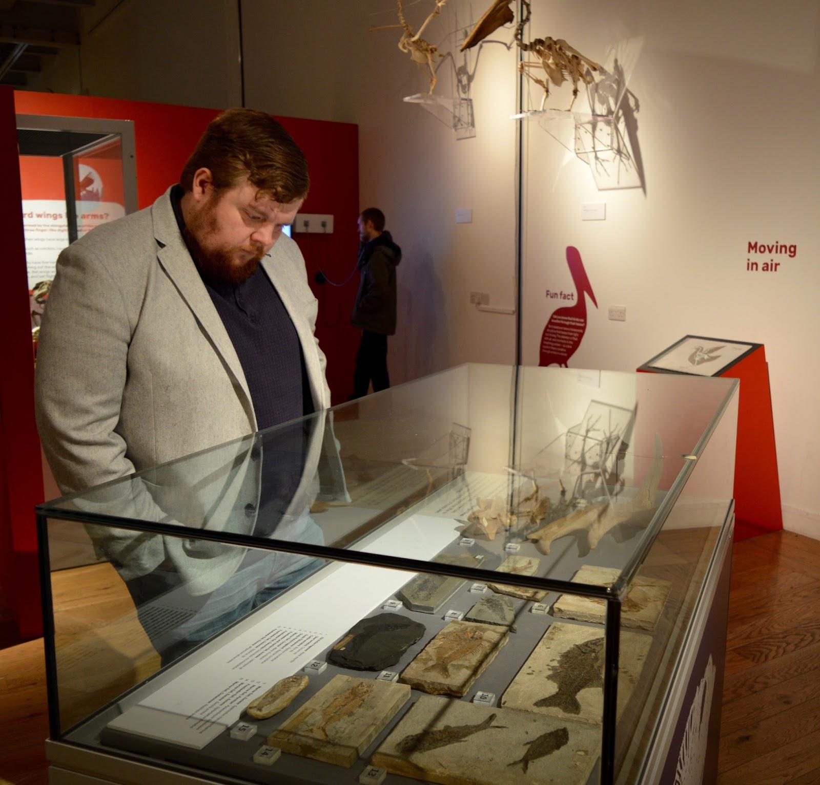 Bones Exhibition at Hancock Museum, Newcastle - fossils