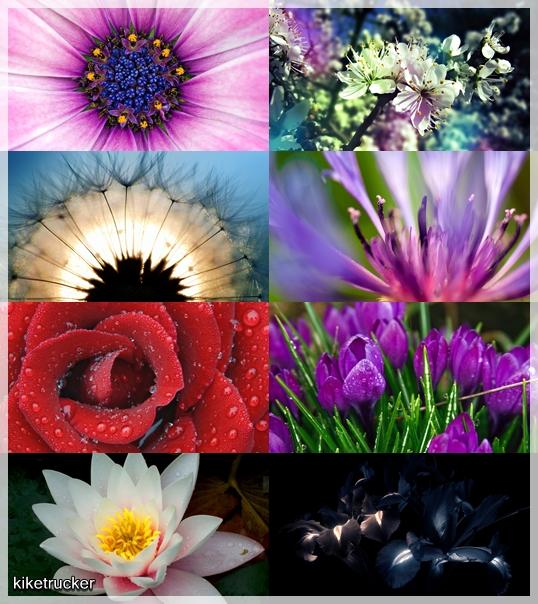 Fondos de pantalla flores multicolor
