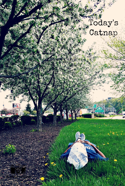 Today's Catnap - Eightymillion Photography