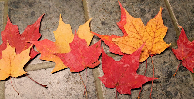 One-Step Autumn Leaf Preservation Trick