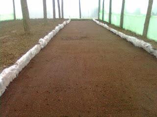 rasadnita ingropata la baza solului in interiorul solarului