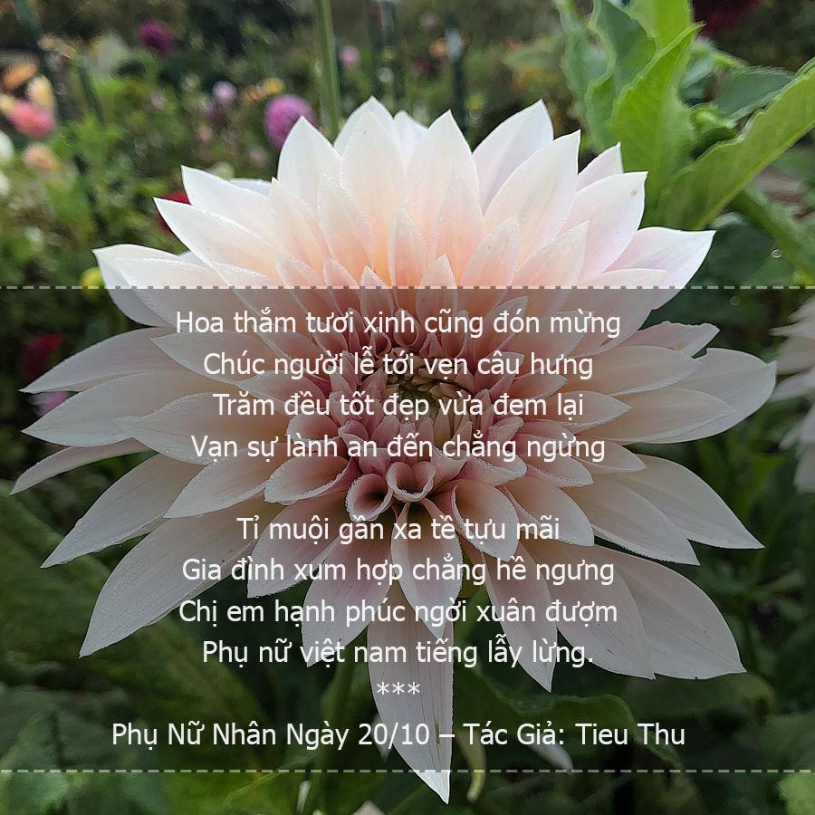 Thơ 20/10 - Chùm Thơ Ngày 20/10 Hay & Ý Nghĩa Tặng Mẹ, Người Yêu