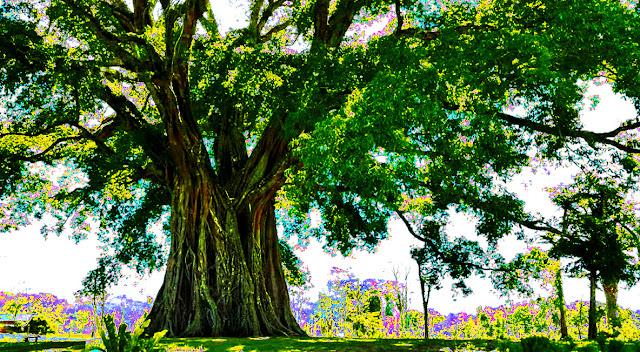 Tiptur tree, Karnataka