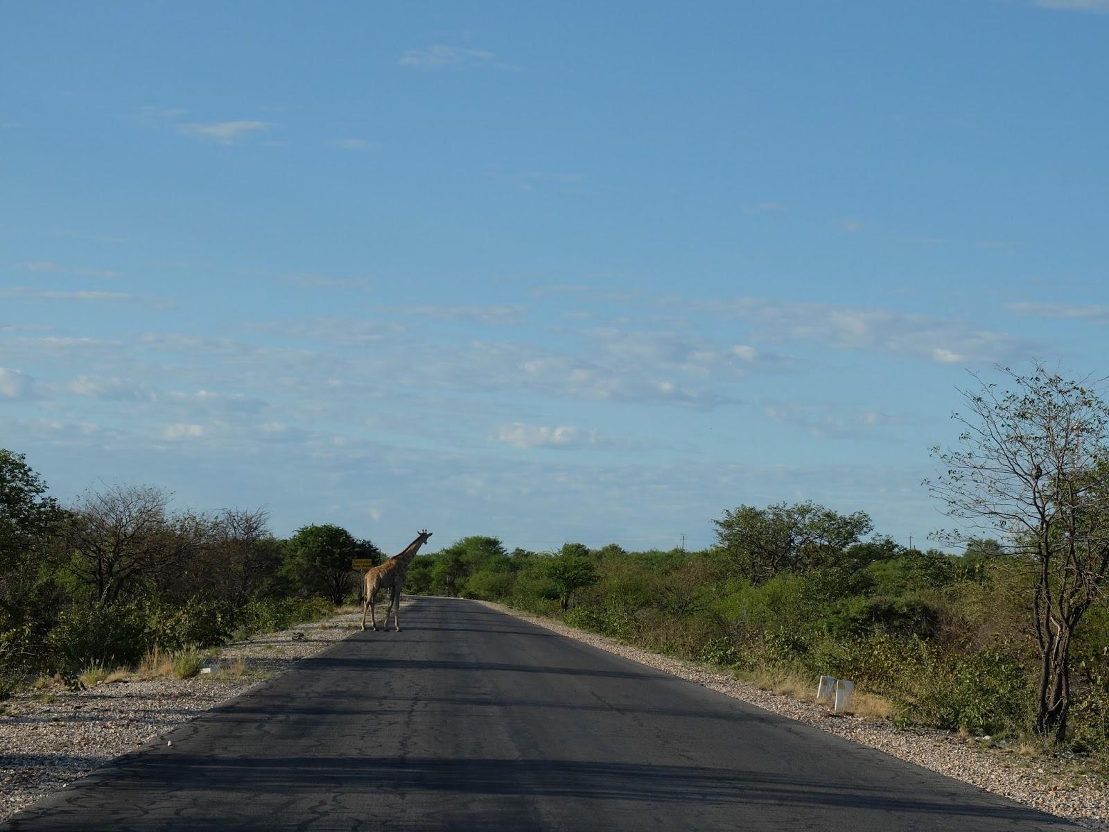 World Traveler Diary: ナミビア周遊の旅7日目(エトーシャ国立公園〜ウィントフック)