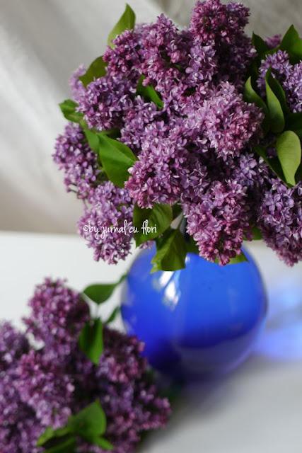 vaza cu liliac #florideliliac #primavara #liliaccufloriduble