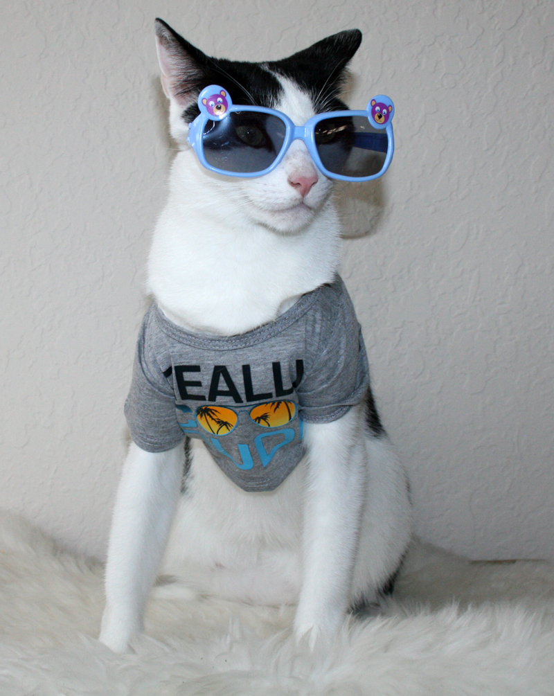 daisy the curly cat really cool dude